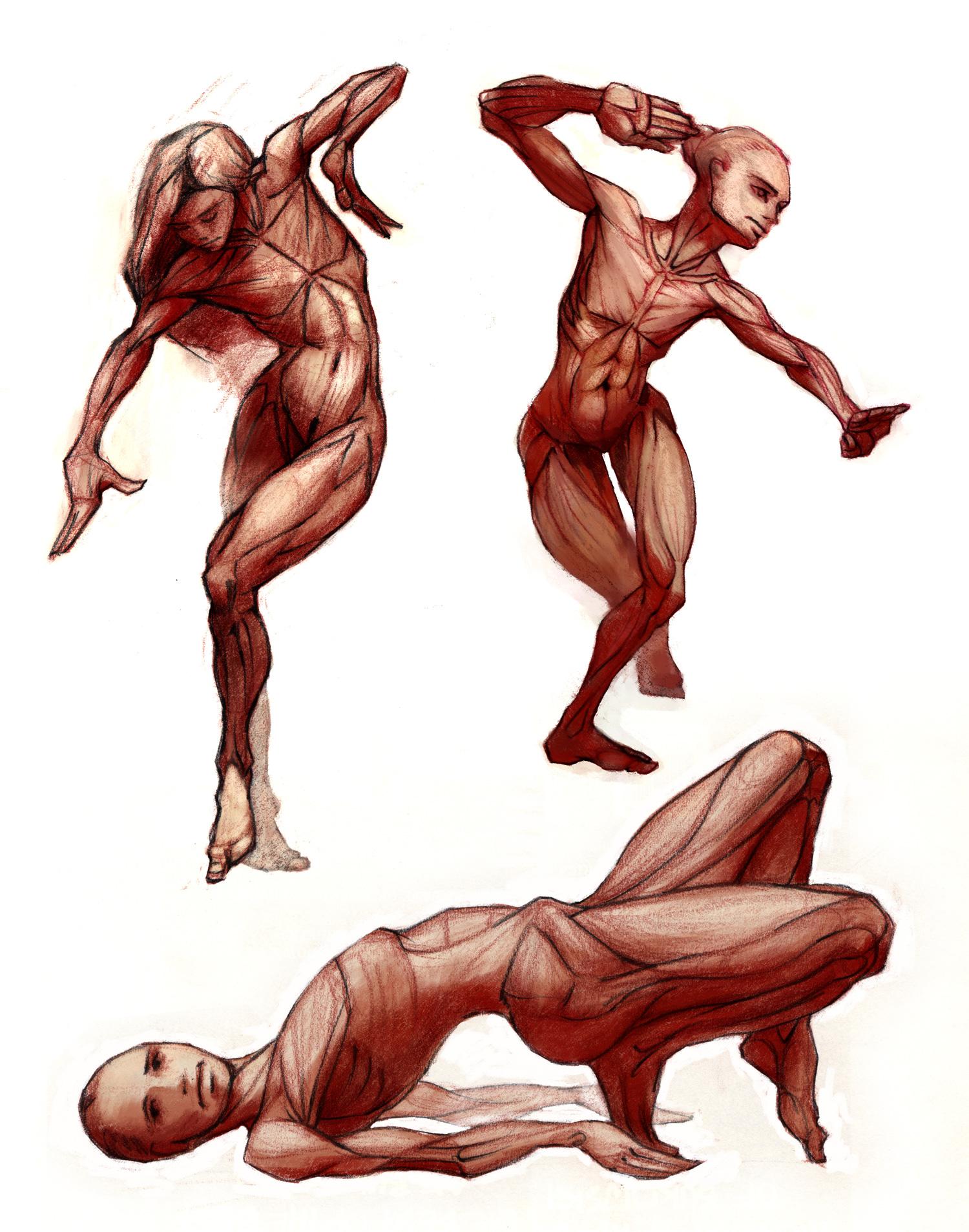 blog_anatomy_muscles2